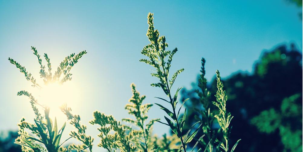 初夏の紫外線対策イメージ