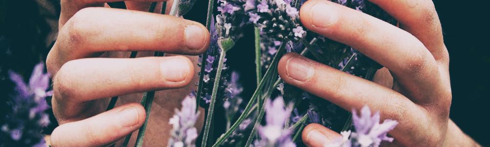 ラベンダーの花束のイメージ