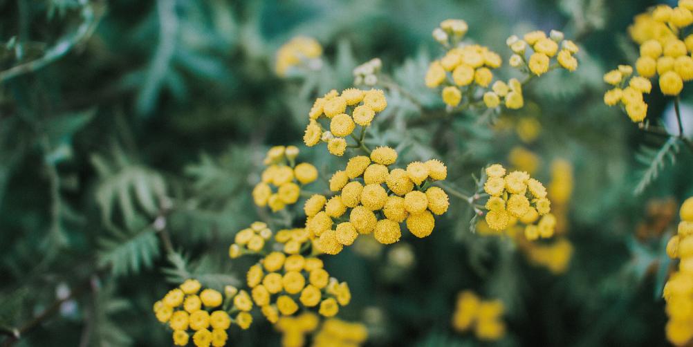 黄色い春の植物の画像