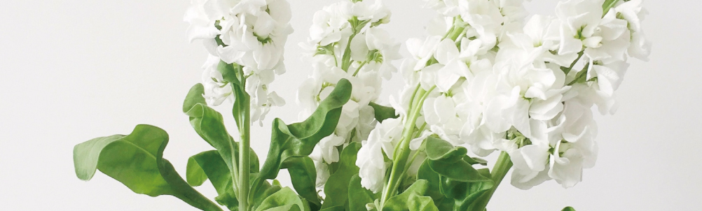 白い花の画像