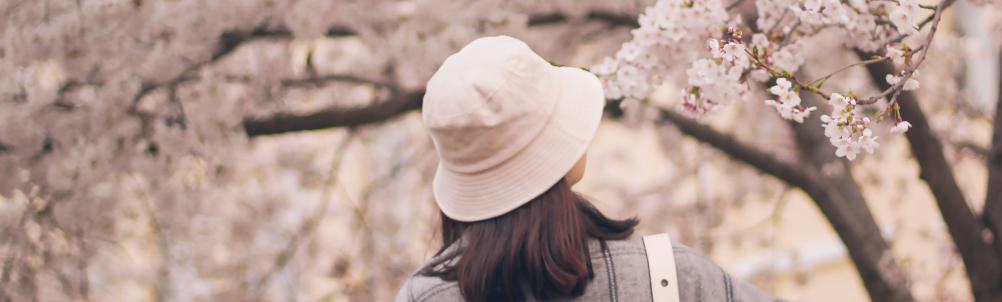 桜の中を歩くの画像