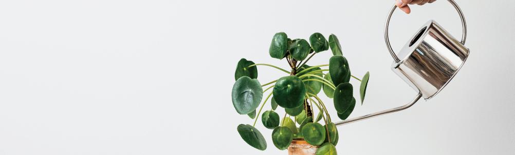 植物に水をあげる画像