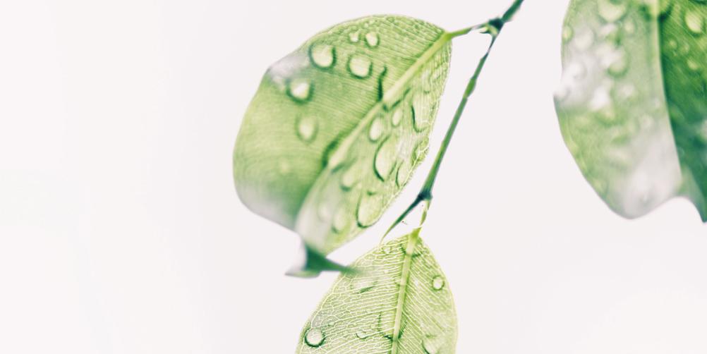 水と葉の画像